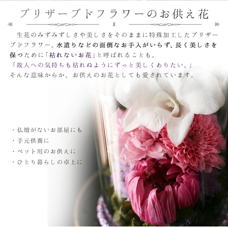 美しい菊やデンファレの拡大画像